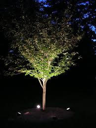 tree floodlights