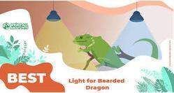 Basking Lamp for Bearded Dragon
